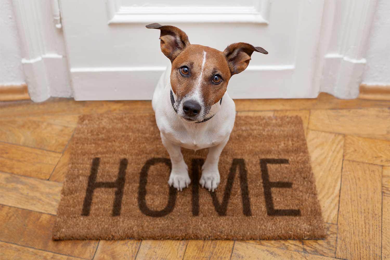 Pet door finestre e porte a misura di animali domestici for Rivista di programmi domestici